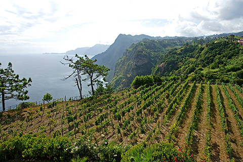 Madeira is exceptionally long lasting – once opened, a bottle will stay drinkable for several months