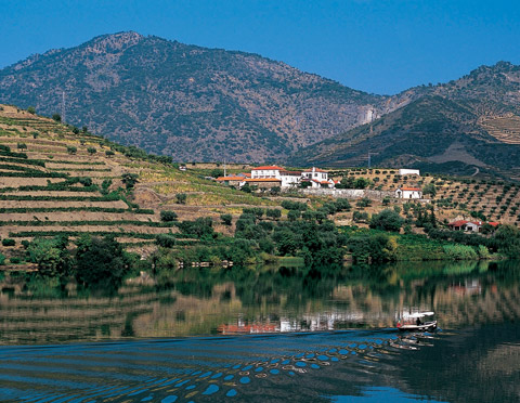 The Douro Valley, where port grapes are grown on incredibly steep terraced vineyards