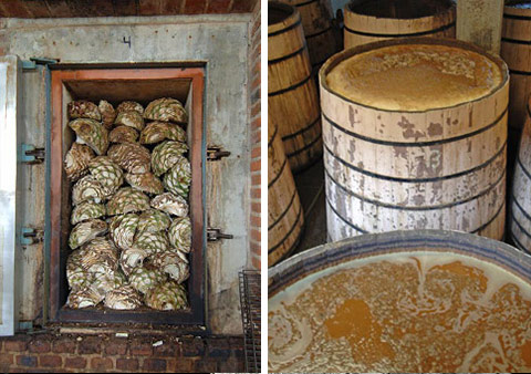 The agave hearts, or piñas, are cooked and crushed to extract their juice